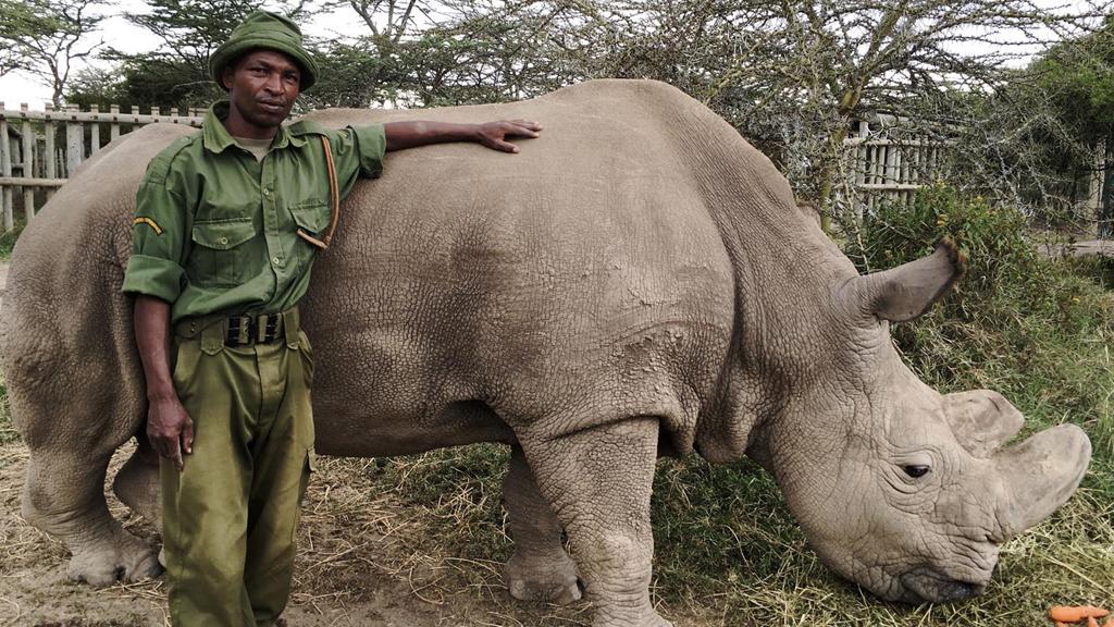 Natural World: Sudan: The Last of the Rhinos
